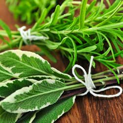 herbs_companion_1
