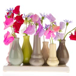 Lathyrus in little vases