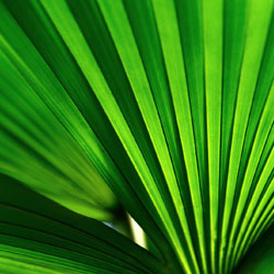 tropics-2
