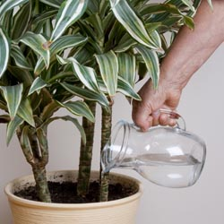 wisewatering1